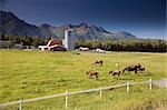 Horses & trainers in pasture w/old Colony barn & farm below Chugach Mountains Mat-Su Valley Alaska Summer                                                                                                Stock Photo - Premium Rights-Managed, Artist: AlaskaStock              , Code: 854-02955547