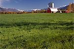 Matanuska Valley Red Barn Farm Land Sky Clouds AK Southcentral Fall Scenic Buildings Grass                                                                                                               Stock Photo - Premium Rights-Managed, Artist: AlaskaStock              , Code: 854-02955557