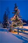 Decorated Christmas tree along snow covered fence rail @ night Anchorage Southcentral Alaska Winter                                                                                                      Stock Photo - Premium Rights-Managed, Artist: AlaskaStock              , Code: 854-02955910