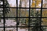 View from cabin of first snowfall Robertson River  Southcentral Alaska Autumn                                                                                                                            Stock Photo - Premium Rights-Managed, Artist: AlaskaStock              , Code: 854-02956022
