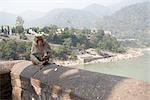 Monkey Eating on Ledge by Ganges River, Rishikesh, Uttarakhand, India                                                                                                                                    Stock Photo - Premium Rights-Managed, Artist: Sarah Murray             , Code: 700-02957956