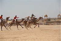 rajasthan camel - Camel Festival, Jaisalmer, Rajasthan, India                                                                                                                                                              Stock Photo - Premium Rights-Managednull, Code: 700-02957994