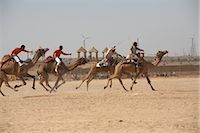 rajasthan camel - Camel Festival, Jaisalmer, Rajasthan, India                                                                                                                                                              Stock Photo - Premium Rights-Managednull, Code: 700-02957995