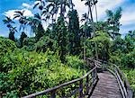 On a boardwalk through the Royal Palms Reserve,Negril,Jamaica.                                                                                                                                           Stock Photo - Premium Rights-Managed, Artist: Axiom Photographic       , Code: 851-02960977