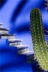 Details of a cactus with blue steps in the background in Majorelle Gardens,Marrakesh,Morocco                                                                                                             Stock Photo - Premium Rights-Managed, Artist: Axiom Photographic       , Code: 851-02962165