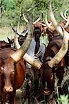 Nomadic cattle herders,Uganda.                                                                                                                                                                           Stock Photo - Premium Rights-Managed, Artist: Axiom Photographic       , Code: 851-02963655