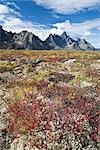 Meadow and Tombstone Mountains, Tombstone Territorial Park, Yukon, Canada Stock Photo - Premium Rights-Managed, Artist: J. David Andrews         , Code: 700-02967559