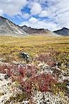Meadow and Tombstone Mountains, Tombstone Territorial Park, Yukon, Canada Stock Photo - Premium Rights-Managed, Artist: J. David Andrews         , Code: 700-02967560