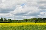 Canola Field, Varmland, Sweden Stock Photo - Premium Rights-Managed, Artist: Jochen Schlenker         , Code: 700-02967775