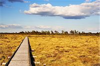Boardwalk, Store Mosse National Park, Sweden Stock Photo - Premium Rights-Managednull, Code: 700-02967796