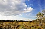 Bog, Store Mosse National Park, Sweden Stock Photo - Premium Rights-Managed, Artist: Jochen Schlenker         , Code: 700-02967800