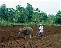 plow - Farmer plowing the field                                                                                                                                                                                 Stock Photo - Premium Rights-Managednull, Code: 855-02987448