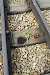 Tributes left to the dead at Auschwitz second concentration camp at Birkenau, UNESCO World Heritage Site, near Krakow (Cracow), Poland, Europe                                                           Stock Photo - Premium Rights-Managed, Artist: Robert Harding Images, Code: 841-02992785