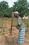 Pounding millet for flour, near Banjul, Gambia, West Africa, Africa                                                                                                                                      Stock Photo - Premium Rights-Managed, Artist: Robert Harding Images, Code: 841-02993292