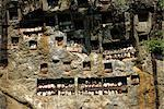 Lemo cliff tombs, Toraja area, Sulawesi, Indonesia, Southeast Asia, Asia                                                                                                                                 Stock Photo - Premium Rights-Managed, Artist: Robert Harding Images, Code: 841-02994040