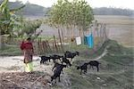 Girl Herding Goats, Namkhana Village, South 24 Parganas District, West Bengal, India Stock Photo - Premium Rights-Managed, Artist: Sarah Murray             , Code: 700-03004203
