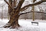 Bench by Tree in Winter Stock Photo - Premium Royalty-Free, Artist: Mike Randolph            , Code: 600-03014847