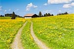 Lane, Rosshaupten, Allgau, Bavaria, Germany Stock Photo - Premium Rights-Managed, Artist: F. Lukasseck             , Code: 700-03016909