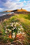 Dunstanburgh Castle and Embleton Bay, Northumberland, England, United Kingdom                                                                                                                            Stock Photo - Premium Rights-Managed, Artist: Tim Hurst                , Code: 700-03016969