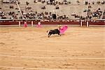 Matador and Bull, La Plaza de Toros de Las Ventas, Madrid, Spain Stock Photo - Premium Rights-Managed, Artist: Arian Camilleri          , Code: 700-03017117