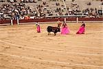 Matadors and Bull, La Plaza de Toros de Las Ventas, Madrid, Spain Stock Photo - Premium Rights-Managed, Artist: Arian Camilleri          , Code: 700-03017118