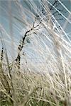 Grass and Bare Tree Stock Photo - Premium Royalty-Free, Artist: Mark Peter Drolet        , Code: 600-03017348