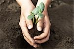Child Planting Cucumber Seedling