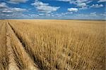 Harvested Wheat Field in Western Kansas, USA Stock Photo - Premium Rights-Managed, Artist: dk & dennie cody         , Code: 700-03017655