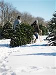 Couple Pulling Christmas Tree Stock Photo - Premium Rights-Managed, Artist: Yvonne Duivenvoorden     , Code: 700-03017745
