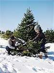 Couple Cutting Down Christmas Tree Stock Photo - Premium Rights-Managed, Artist: Yvonne Duivenvoorden     , Code: 700-03017746