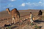 Shepherd boy with two camels in arid landscape, near Ouarzazate, Morocco, North Africa, Africa                                                                                                           Stock Photo - Premium Rights-Managed, Artist: Robert Harding Images    , Code: 841-03029265