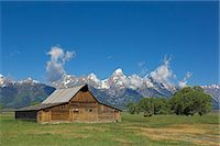 Mormon Row Barn and a bison off Antelope Flats Road, Jackson Hole, Grand Teton National Park, Wyoming, United States of America, North America                                                           Stock Photo - Premium Rights-Managednull, Code: 841-03032306