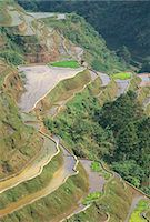 philippine terrace farming - Banaue terraced rice fields,UNESCO World Heritage Site,northern area,island of Luzon,Philippines,Southeast Asia,Asia                                                                                     Stock Photo - Premium Rights-Managednull, Code: 841-03034252