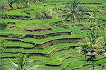 Rice terraces,Bali,Indonesia                                                                                                                                                                             Stock Photo - Premium Rights-Managed, Artist: Robert Harding Images    , Code: 841-03035655