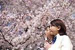 Young Japanese women and cherry blossoms                                                                                                                                                                 Stock Photo - Premium Rights-Managed, Artist: Aflo Relax               , Code: 859-03037938
