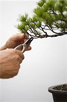 Person Snipping a Tiny Branch off a Bonsai Tree                                                                                                                                                          Stock Photo - Premium Rights-Managednull, Code: 859-03038025
