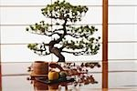 Japanese Sweets in Front of a Bonsai Tree                                                                                                                                                                Stock Photo - Premium Rights-Managed, Artist: Aflo Relax               , Code: 859-03038039