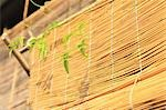 Bamboo Window Blinds                                                                                                                                                                                     Stock Photo - Premium Rights-Managed, Artist: Aflo Relax               , Code: 859-03039317