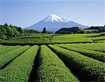 Mt. Fuji                                                                                                                                                                                                 Stock Photo - Premium Rights-Managed, Artist: Aflo Relax               , Code: 859-03040666