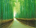 Path Through A Bamboo Forest                                                                                                                                                                             Stock Photo - Premium Rights-Managed, Artist: Aflo Relax               , Code: 859-03041069
