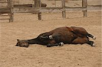 Horse on the Ground                                                                                                                                                                                      Stock Photo - Premium Rights-Managednull, Code: 858-03047658