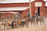 Two Cowboys Herding Cattle                                                                                                                                                                               Stock Photo - Premium Rights-Managednull, Code: 858-03047666