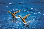 Synchronized Swimming                                                                                                                                                                                    Stock Photo - Premium Rights-Managed, Artist: Aflo Sport               , Code: 858-03051441