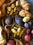Variety of Potatoes                                                                                                                                                                                      Stock Photo - Premium Rights-Managed, Artist: Yvonne Duivenvoorden     , Code: 700-03053807