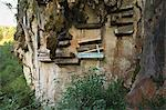 Hanging coffins of Animistic Applai elders entombed on limestone cliffs, Sagada Town, The Cordillera Mountains, Benguet Province, Luzon, Philippines, Southeast Asia, Asia                               Stock Photo - Premium Rights-Managed, Artist: Robert Harding Images    , Code: 841-03055225