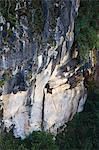 Hanging coffins of Animistic Applai elders entombed on limestone cliffs, Sagada Town, The Cordillera Mountains, Benguet Province, Luzon, Philippines, Southeast Asia, Asia                               Stock Photo - Premium Rights-Managed, Artist: Robert Harding Images    , Code: 841-03055226