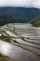 philippine terrace farming - Afternoon sunshine reflected on water filled rice terraces near Tinglayan, The Cordillera Mountains, Kalinga Province, Luzon, Philippines, Southeast Asia, Asia                                          Stock Photo - Premium Rights-Managednull, Code: 841-03055238