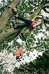 Arborist in Tree, Devon, England Stock Photo - Premium Royalty-Free, Artist: Matt Brasier             , Code: 600-03059103