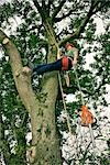 Arborist in Tree, Devon, England Stock Photo - Premium Royalty-Free, Artist: Matt Brasier             , Code: 600-03059104