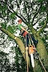 Arborist in Tree, Devon, England Stock Photo - Premium Royalty-Free, Artist: Matt Brasier             , Code: 600-03059105